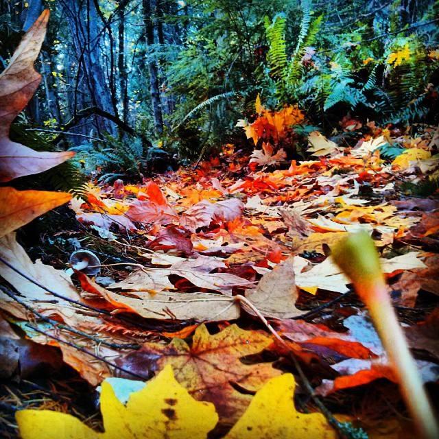 Autumn Colors at Seward Park